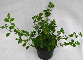 artificial plants for home decor india 2 great furniture references