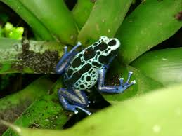 80 best a frog went walking on a summer u0027s day images on