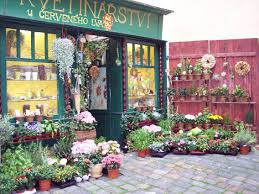 flower store best plant and flower shops bleuet coquelicot store design