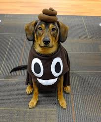 Cute Small Dog Halloween Costumes 25 Kids Dog Costume Ideas Boy