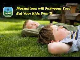 Best Mosquito Killer For Backyard Best Yard Mosquito Repellent Youtube