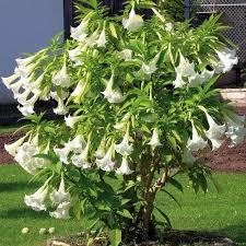 kletterpflanzen fã r balkon 12 besten gartenpflanzen für beet und kübel bilder auf