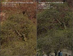 full frame vs micro 4 3 revisited with pro olympus lens guest