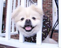 puppy bumpers puppy bumpers keep dogs from getting out of fences