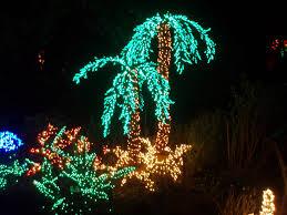 palm tree christmas lights at the bellevue botanical garde u2026 flickr