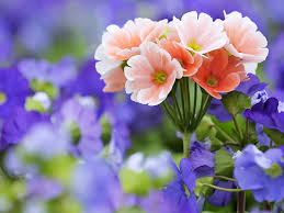 image of spring flowers for your desktop spring flowers wallpapers 43 top quality spring