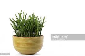 potted plant stock photos and pictures getty images