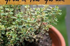 Easy Herbs To Grow Inside How To Make A One Pot Indoor Herb Garden Apartment Therapy