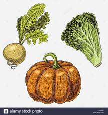 set of hand drawn engraved vegetables vegetarian food plants