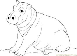 cute hippopotamus baby coloring free hippopotamus coloring