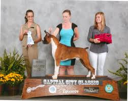 boxer dog 2015 66th annual specialty show 2 heart of america boxer club inc