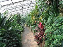 Tropical Plants For Garden - tropical garden wikipedia