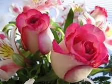 Las flores que nos gustan. Images?q=tbn:ANd9GcQed0MjdZ0YlAf4c_sDSqW7t-bLk0QtzotqkXzRuA2kusQia4H98FqiNpqAmw