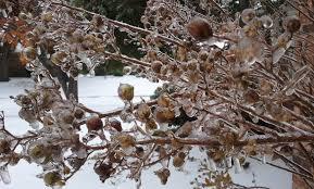 winter gardening tips from texas gardening expert neil sperry