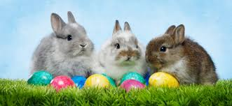 bunny easter 7 things you never knew about the easter bunny