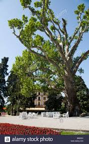villa d u0027este luxury hotel on lake como garden with big platanus