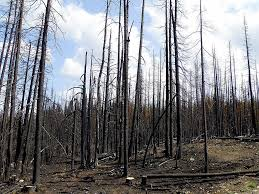 Bc Active Wildfires by May 3 2016 U2013 Tree Frog Creative