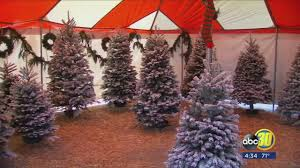 consumers will pay more this year for fresh christmas trees amid