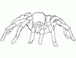 Coloring Pages On Spider And Spider Web Coloring Page In Halloween Web Coloring Pages