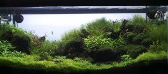 membuat aquascape bening the secret to making plants bushy and compact aquascaping