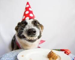 Birthday Cake Dog Meme - birthday dog blank template imgflip