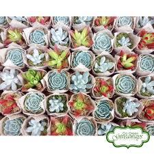 9 best succulents philippines wedding souvenirs favors