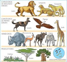 imagenes de animales carnivoros para imprimir cadena alimenticia www avesrapaces wiki