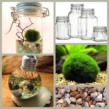 diy jar aquarium terrarium what you need jar japanese marimo