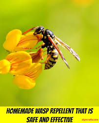 homemade wasp repellent that is safe and effective diy u0026 crafts