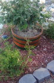 what to do with half wine barrels paso wine barrels