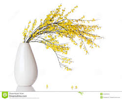 french broom branch in vase isolated stock photo image 54305378