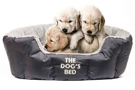 the best top 14 stylish dog beds for small dogs