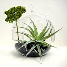 create an unforgettable air plant terrarium lining shop info