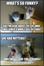 Kittens Memes - corny pun kittens memes quickmeme