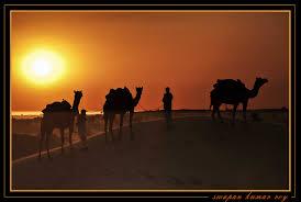 thar desert golden sunset at thar desert rajasthan a photo from rajasthan