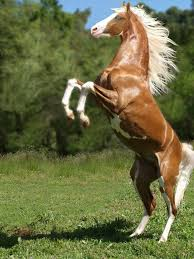 1684 best horses images on pinterest horses nature and pretty