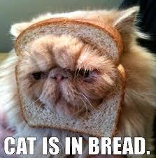 Morpheus Cat Meme - whole wheat cat meme kitties pinterest cat image cat and