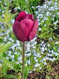 Edible Flowers Edible Landscaping Growing Edible Flowers In Your Garden