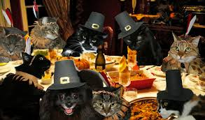 cat thanksgiving 2014