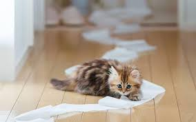20 funny cats play with toilet paper make you laugh