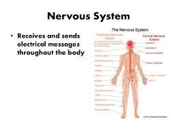 Human Anatomy And Body Systems Introduction To Human Body Systems