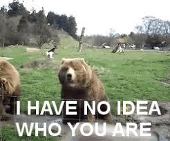 Funny Meme Gifs - animal funny funny animal gif wifflegif