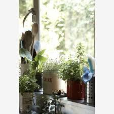 Window Sill Herb Garden Designs 17 Best Herb Planters Images On Pinterest Gardening Tips