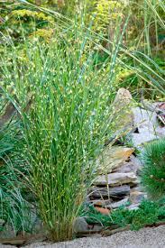 ornamental grasses take center stage in fall winter las vegas