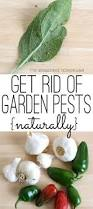 452 best gardening images on pinterest vegetable garden