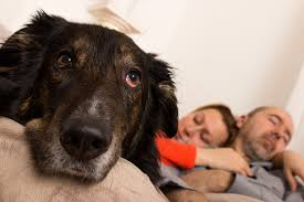 7 separation anxiety myths whole dog journal