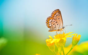 butterfly on yellow flower 6956840