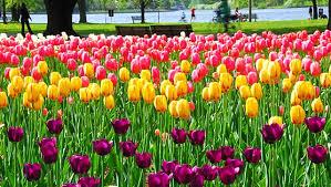 in pics it u0027s finally feeling like spring around the world
