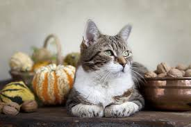 thanksgiving safety and for cats petcha
