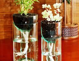 plant wonderful best plants best indoor palm trees indoor